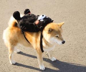dog, animals, and kumamon image