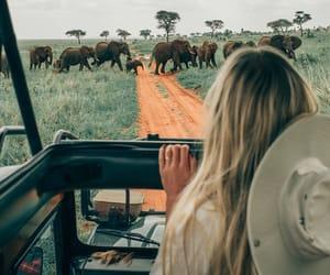 travel, elephant, and nature image