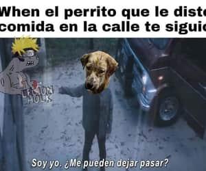 comida, meme, and perrito image