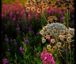 beauty, flowers, and gardening image