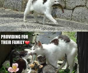 cat, cats, and fish image