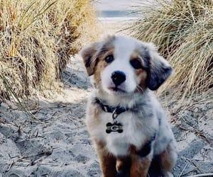 puppy, dog, and animals image