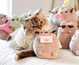 cats, gatito, and kawai image