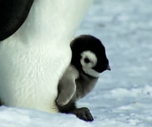 animals, penguins, and gif image