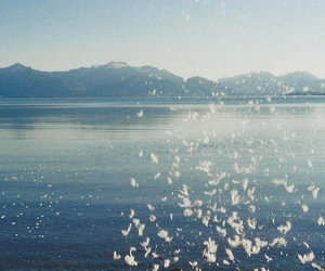 sea, feather, and mountains image