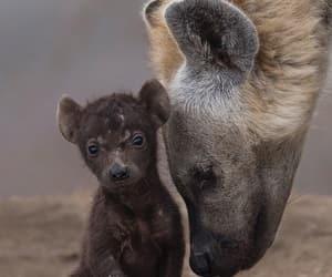africa, animals, and cub image