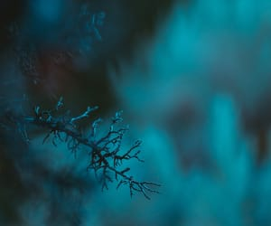 blue, branch, and snow image