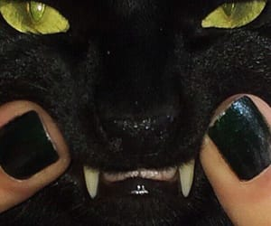 cat, black, and nails image