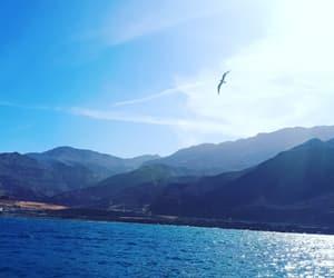 sea, طائر, and ﺑﺤﺮ image