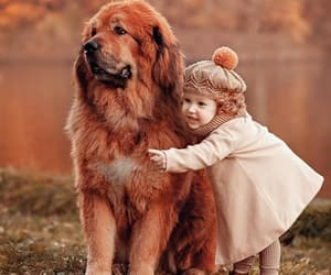 animals, dogs, and kids image