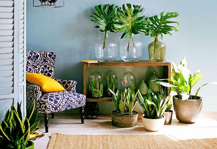 Home 24 Indoor Plants Decoration Ideas Zerbantina