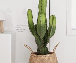 cactus, plants, and decoration image