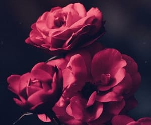 flowers, background, and rose image
