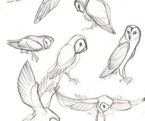 birds, drawing, and Howl image