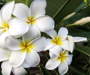 air, bali, and flower image