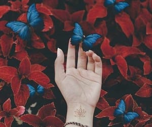 butterfly, red, and blue image
