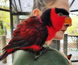 lol, parrot, and perpective image