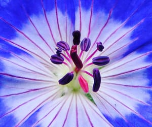 blue, macro, and flowers image