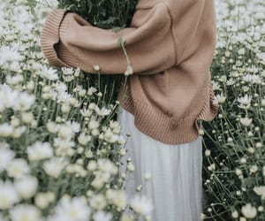 field, flowers, and photography image