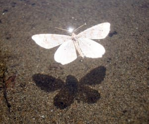 butterfly, shadow, and aesthetic image