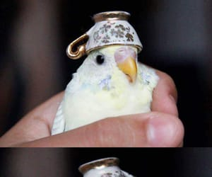 funny, birb, and cute image
