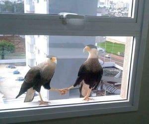funny, handshake, and hawks image
