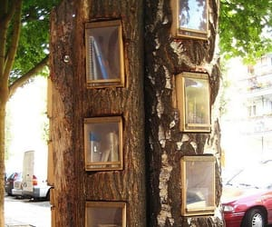 tree, book, and library image