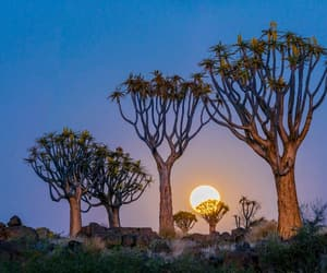 aesthetic, africa, and beauty image