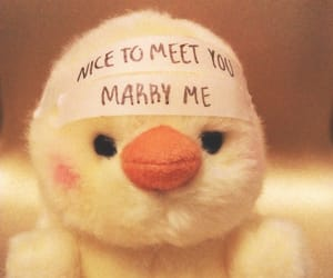 Chicken, funny, and marry image