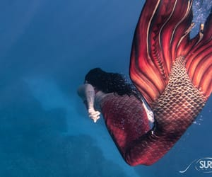 hawaii, mermaids, and underwater photography image
