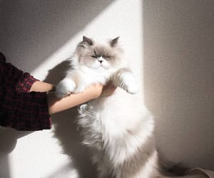 cat, love, and light image