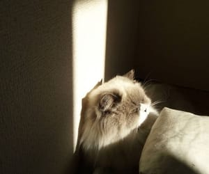 life, light, and cute image