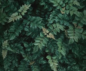 forest, green, and leafs image