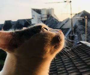 cat, summer, and france image