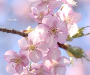 flower, spring, and instagram image