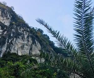 halong bay, nature, and palm trees image