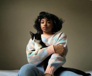 cat, tuxedo cat, and aesthetically pleasing image