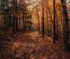 forest, october, and walk image