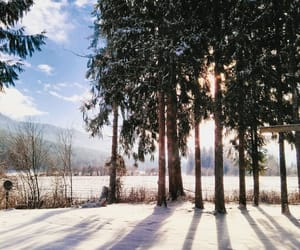 nature, sun, and winter image