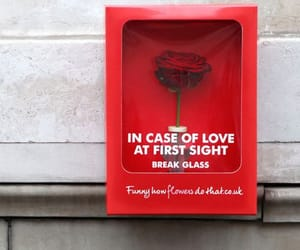 love, rose, and red image