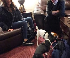 animals, brendon urie, and cute image