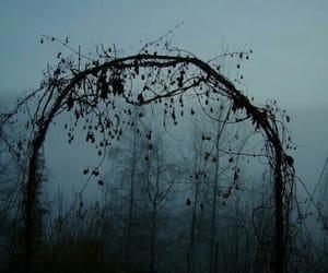dark, nature, and tree image