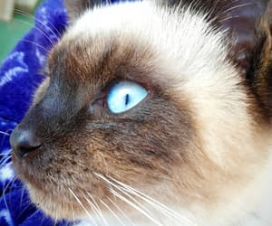 aesthetic, animal, and blue eye image