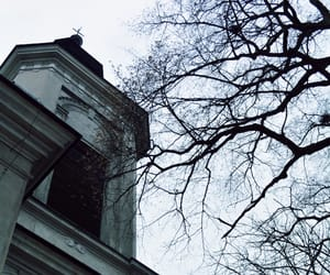 black, branches, and building image
