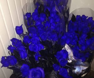 blue, roses, and flowers image