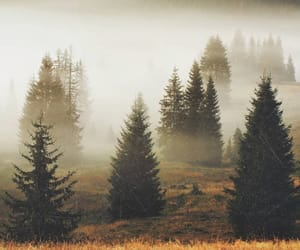 forest, autumn, and fog image