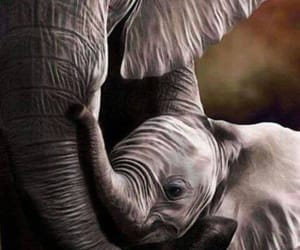 elephant, animal, and mother image