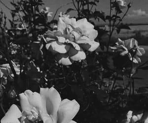 background, beautiful, and blackandwhite image