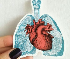 heart, lungs, and medicine image
