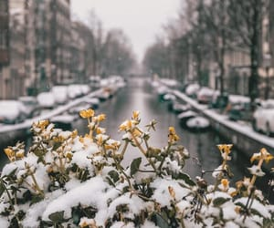 amsterdam, blurry, and COLDS image